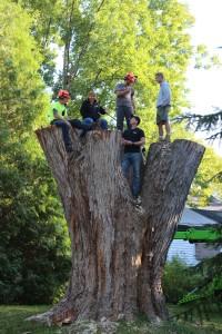 Employment Tree Service