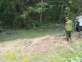 After Stump Grinding